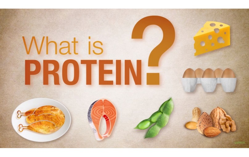 What are proteins